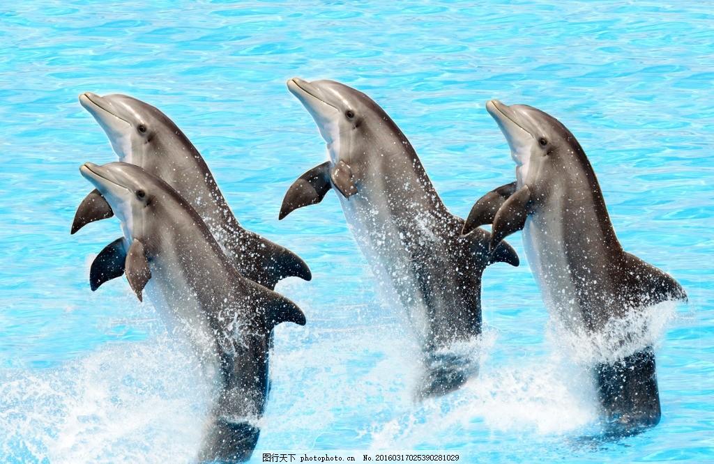 可爱海豚 唯美 炫酷 可爱 海豚 动物 哺乳动物 摄影 生物世界 海洋
