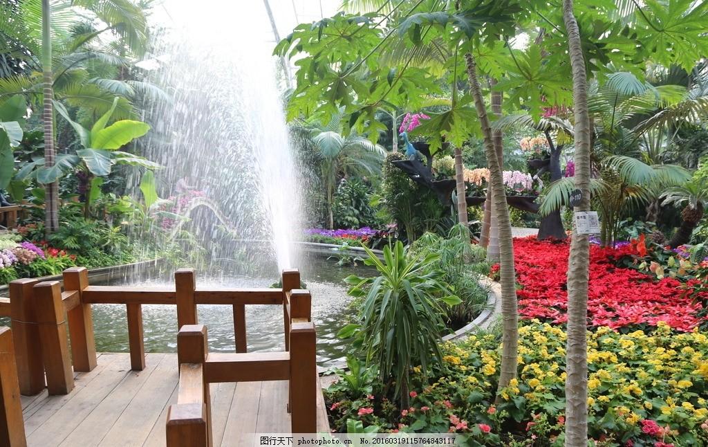 植物园温室 花房 木栈道 喷泉 园林景观 热带植物 园林摄影 绿化景观