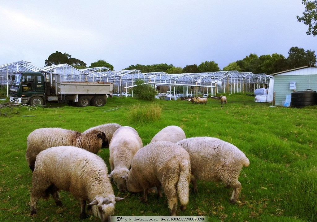 新西兰农场风景 蓝天 白云 农牧场 蔬菜大棚 绿树 绿地 草地