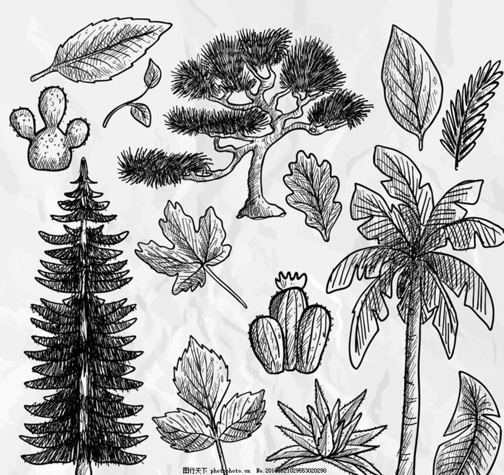手绘植物 树叶 松树 椰子树 枫叶 仙人掌 树木