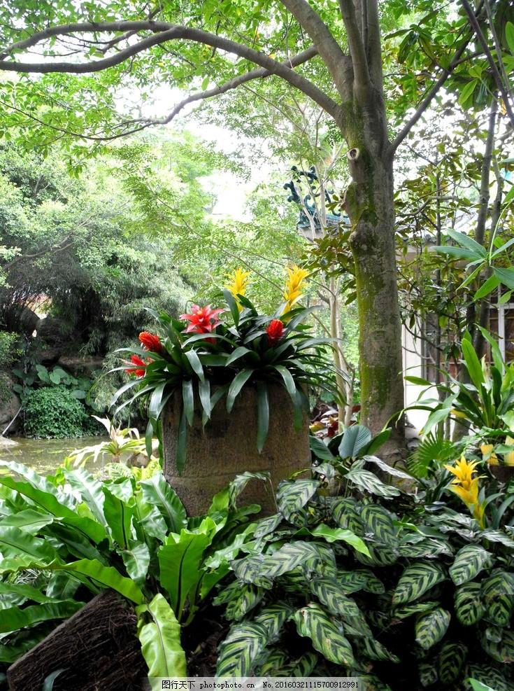 厦门植物园 热带植物 灌木丛 布迪椰树 雨林 园林设计 旅游摄影 摄影