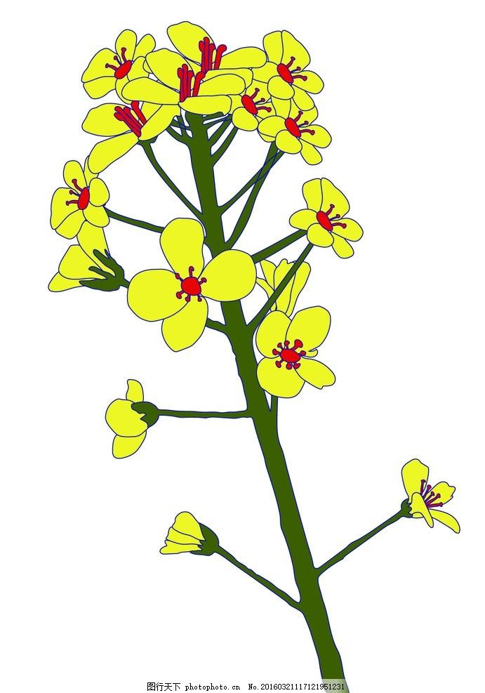 花 油菜花 矢量花 花朵 花束 设计 自然景观 自然风光 ai