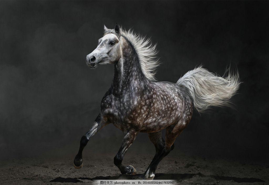 炫酷骏马 唯美 动物 野生 野马 千里马 摄影
