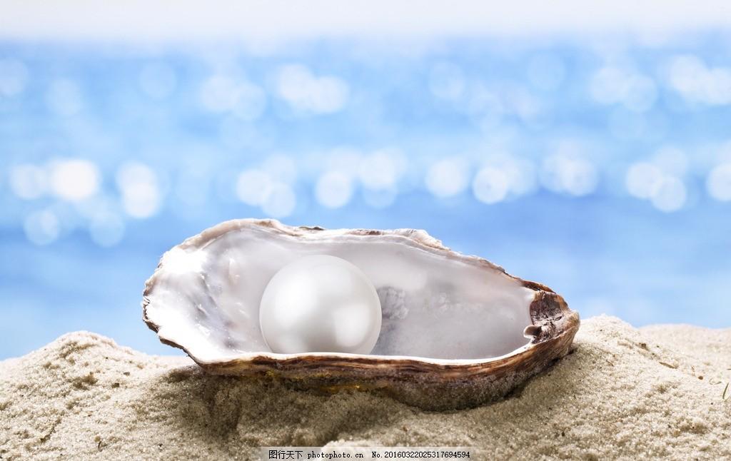 唯美 风景 风光 旅行 自然 秦皇岛 大海 海 海边 贝壳 摄影 生物世界