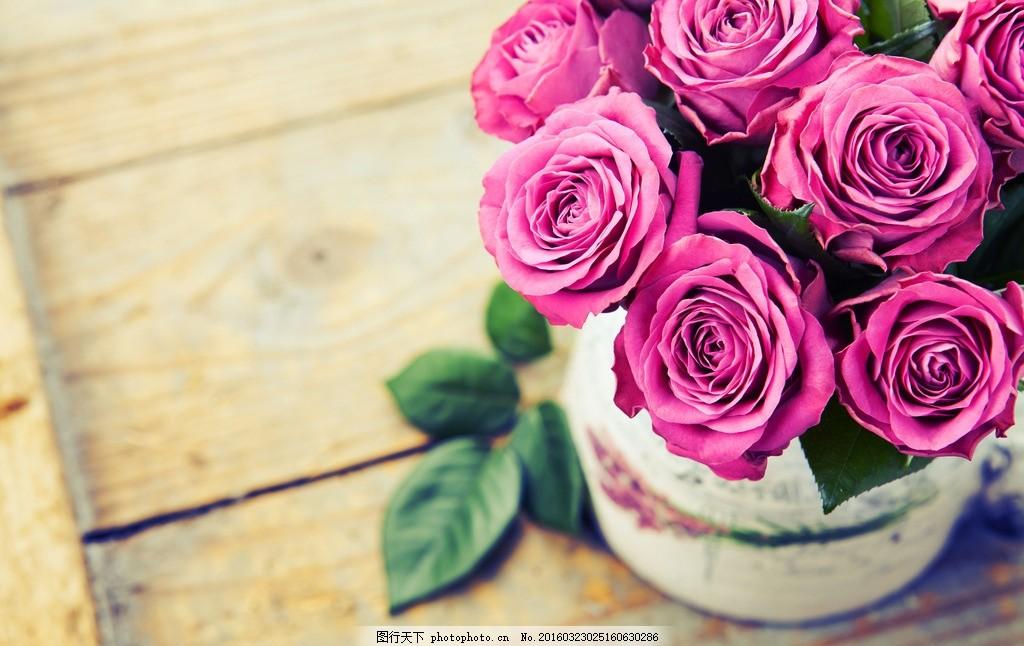 粉玫瑰 唯美 植物 自然 鲜花 花卉 花朵 玫瑰花 摄影
