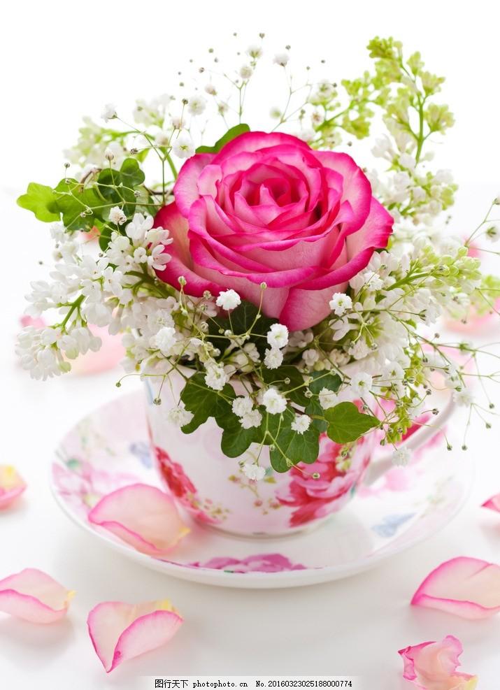 粉玫瑰 唯美 植物 自然 鲜花 花卉 花朵 玫瑰花 浪漫 摄影