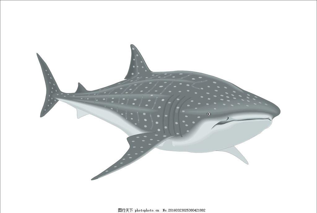 鲨鱼的生物结构图