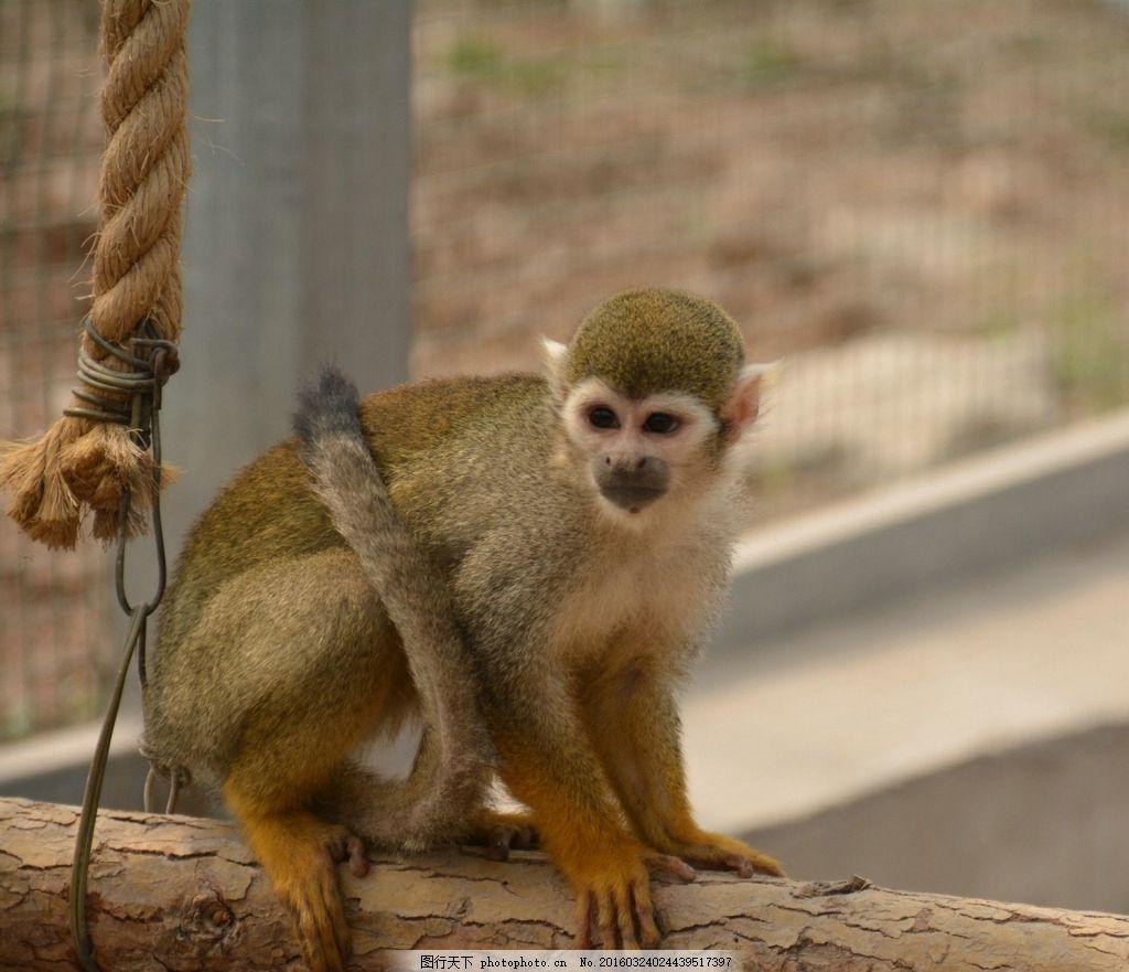 动物 摄影 自然 随手 爱好 摄影 生物世界 野生动物 96dpi jpg