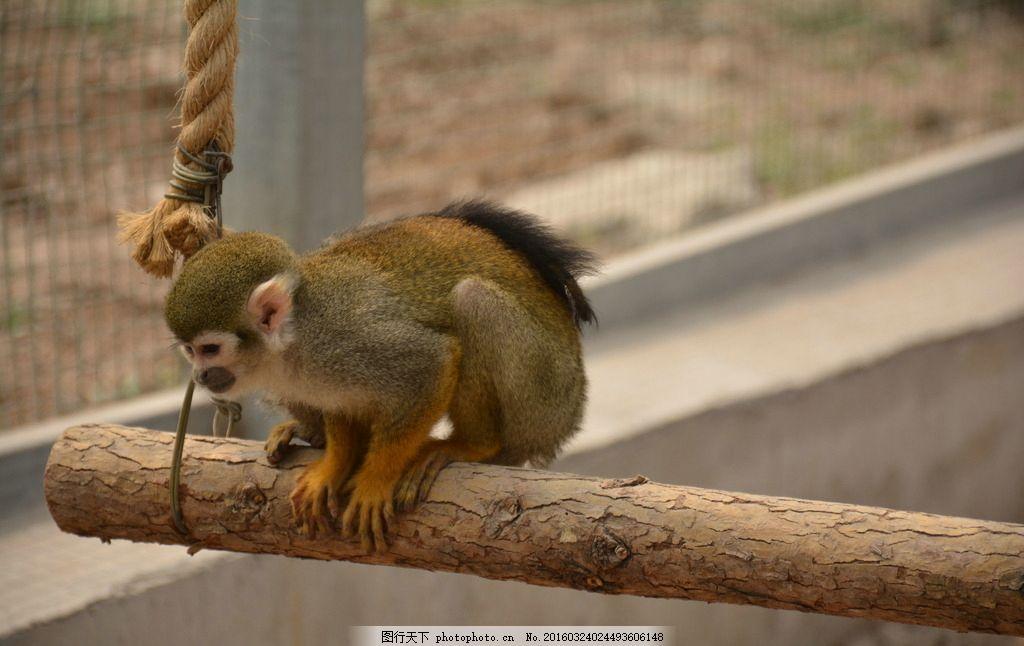 动物 摄影 自然 随手 爱好 摄影 生物世界 野生动物 300dpi jpg