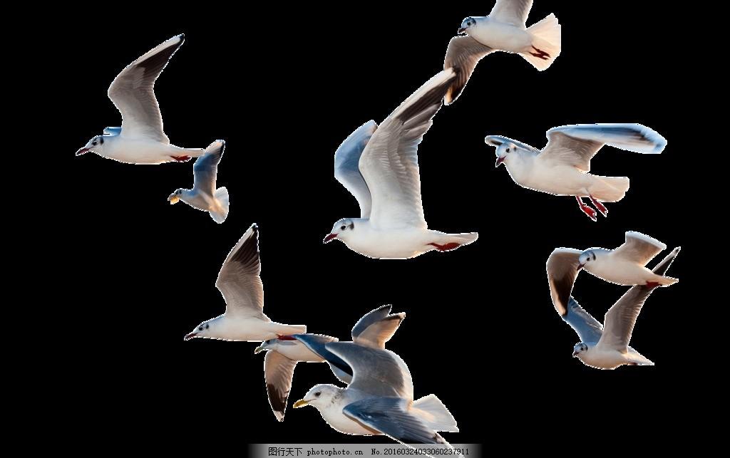 鸟 飞鸟 抠图海鸥 带图层 翅膀 飞翔 自由 其他设计 设计 psd分层素材