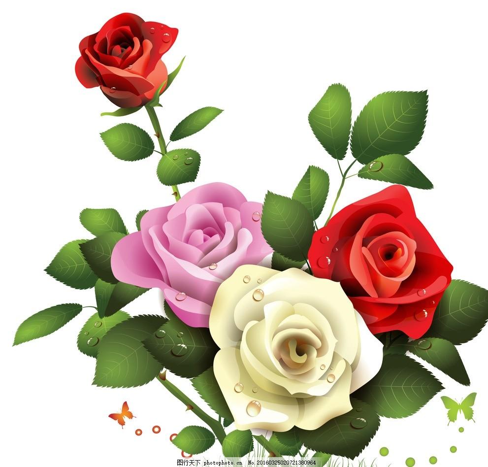玫瑰 图片下载 玫瑰花 彩色玫瑰 手绘玫瑰 玫瑰花纹 精美花纹 玫瑰