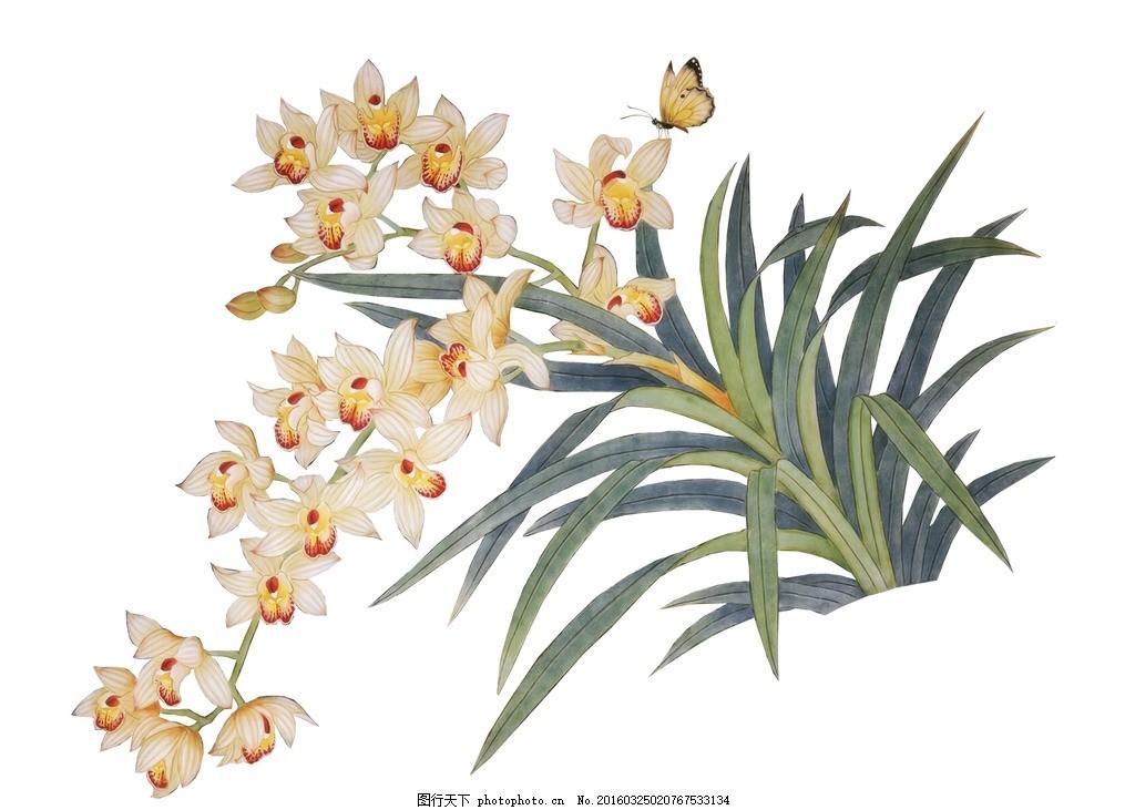 兰花 图片下载 手绘兰花 花卉 蝴蝶 鲜花 手绘花纹 精美花纹