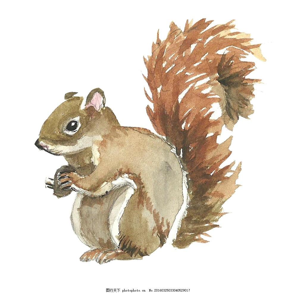 水彩松鼠 水彩画 水彩动物