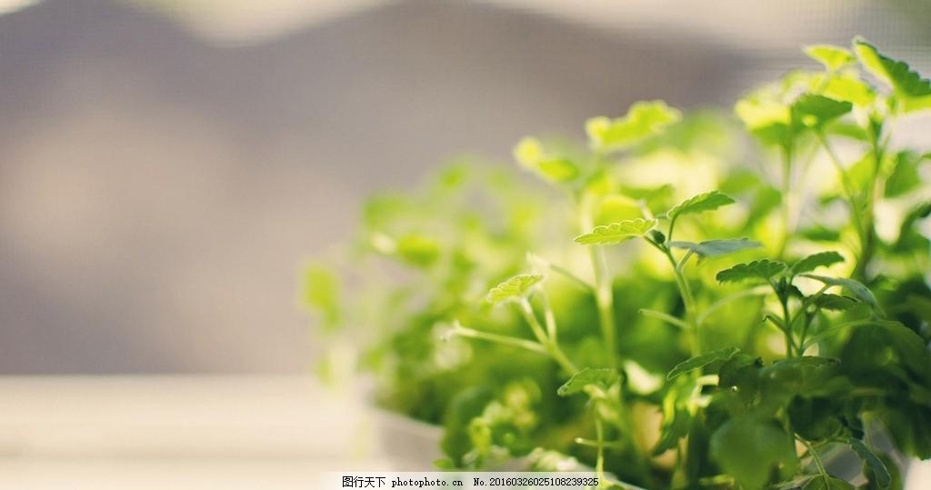 摄影 花卉 静物 风景 植物 素材 绿植 摄影 生物世界 花草 120dpi jpg