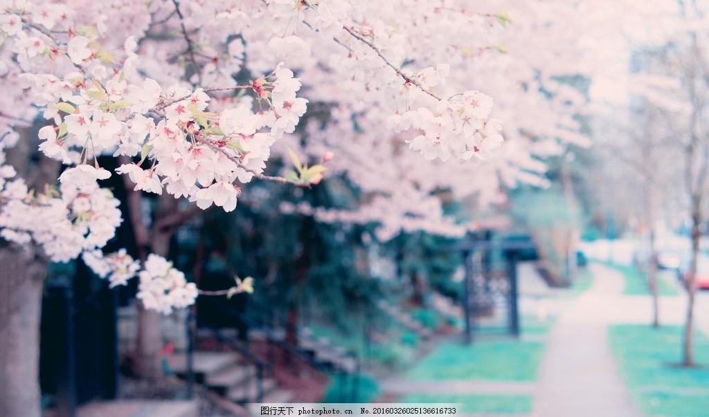 唯美花 摄影 风景 照片 景色 自然 花朵 道路 小清新