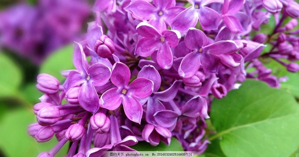 紫色花卉 摄影 花卉 静物 风景 植物 素材 绿植 摄影 生物世界 花草