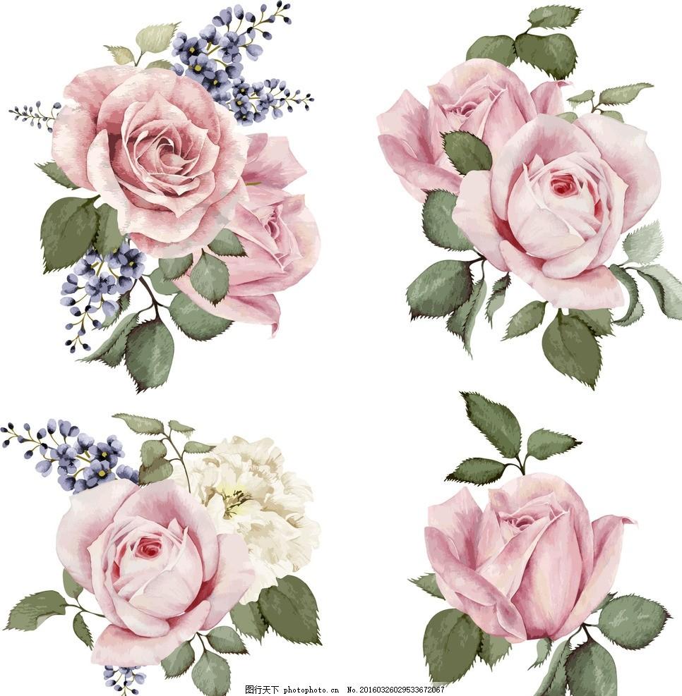 手绘花朵 手绘玫瑰花 手绘花卉 手绘鲜花 边框 花朵肌理 盛开牡丹花
