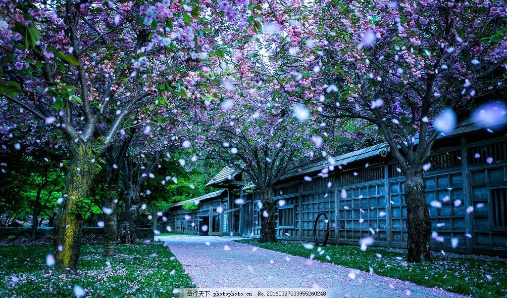 唯美落花 摄影 风景 素材 照片 景色 落花 庭院 唯美 小清新 摄影