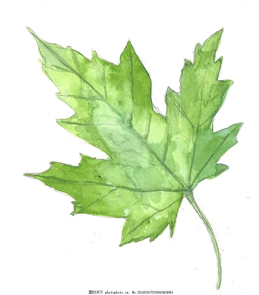 水彩画 水彩 树叶 绿叶 水彩绿叶 设计 psd分层素材 psd分层素材 300d图片