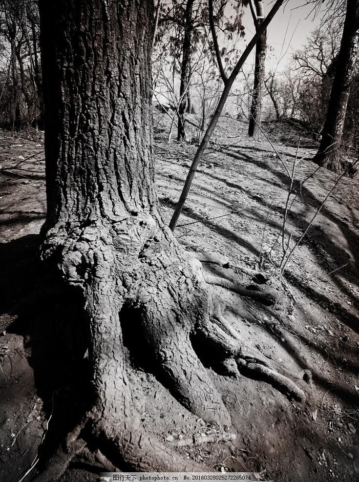树根 树干 树枝 老树 植物 沧桑 树林 树皮 根茎 岁月 树 土地 郊外
