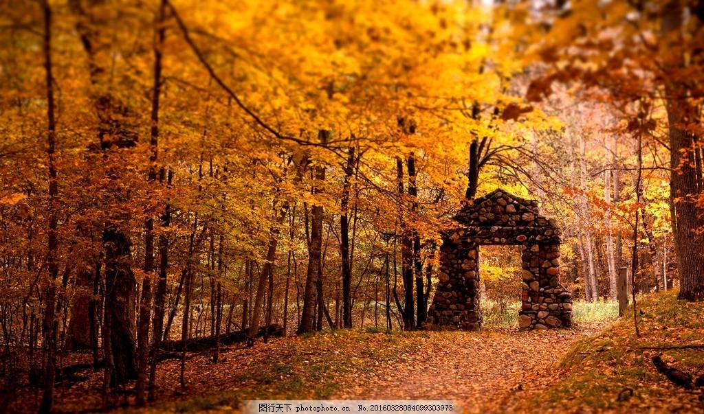 枫树林 摄影 风景 素材 照片 景色 树木 枫树 道路 摄影 自然景观