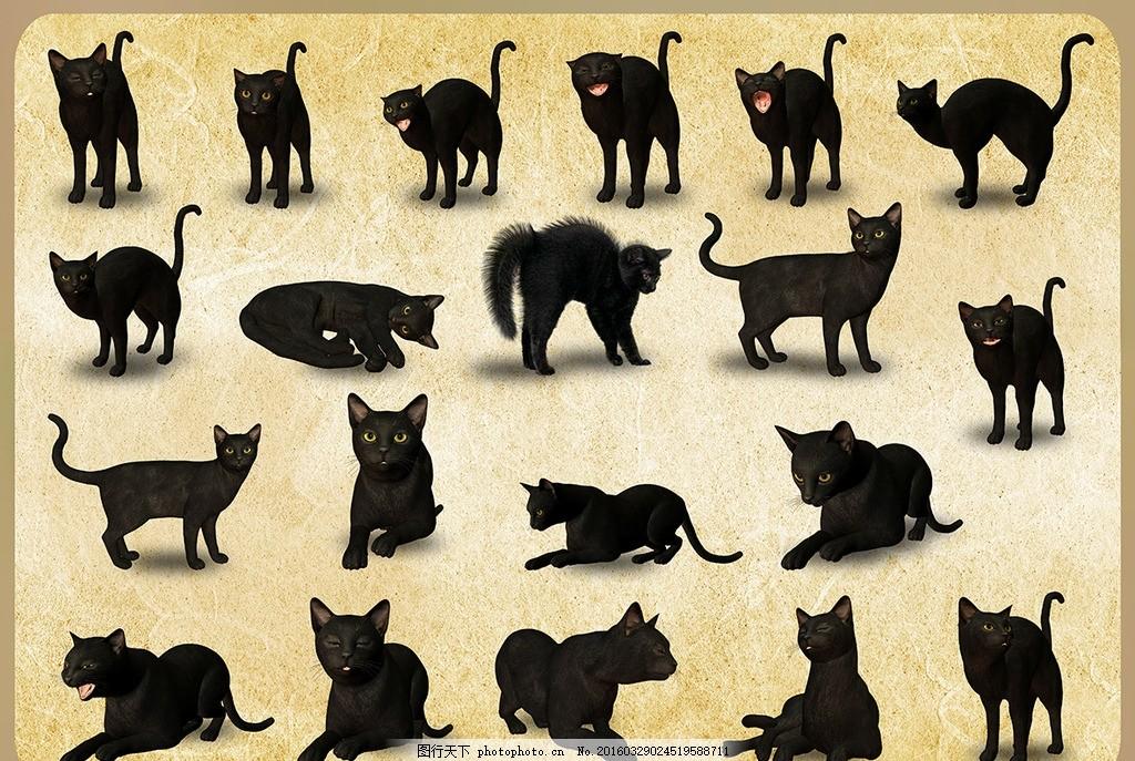动物黑猫 免扣 猫咪 宠物 小猫 家畜 猫科