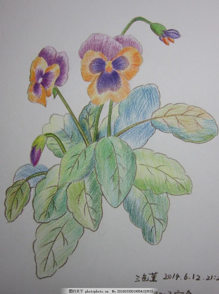 三色堇 小影子 彩铅 手绘 花卉 工作室 摄影 美术绘画