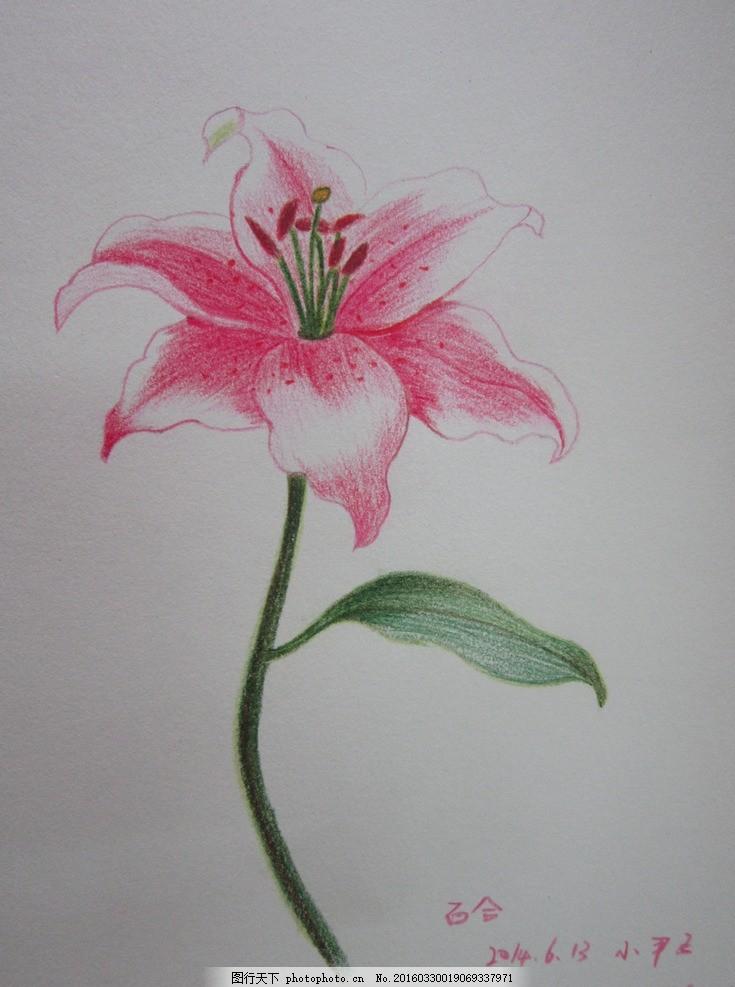 百合 小影子 彩铅 手绘 花卉 画 摄影 文化艺术 美术绘画 180dpi jpg