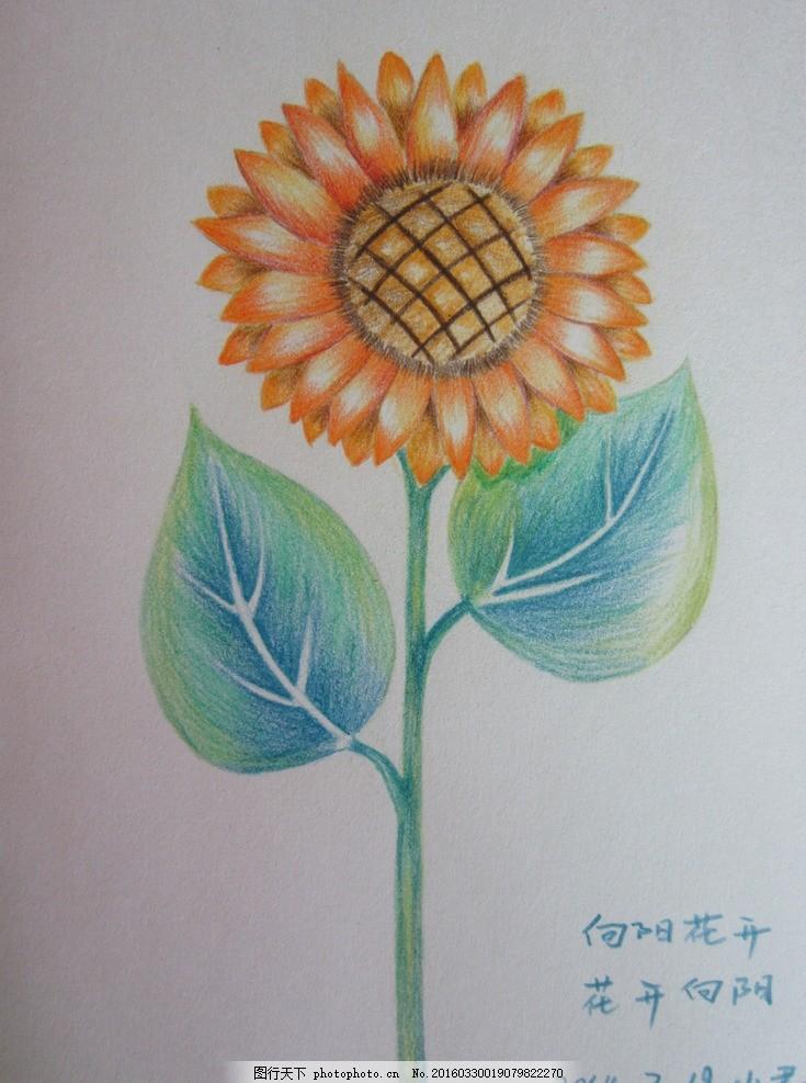 向日葵 小影子 彩铅 手绘 花卉 工作室 摄影 文化艺术 美术绘画 180