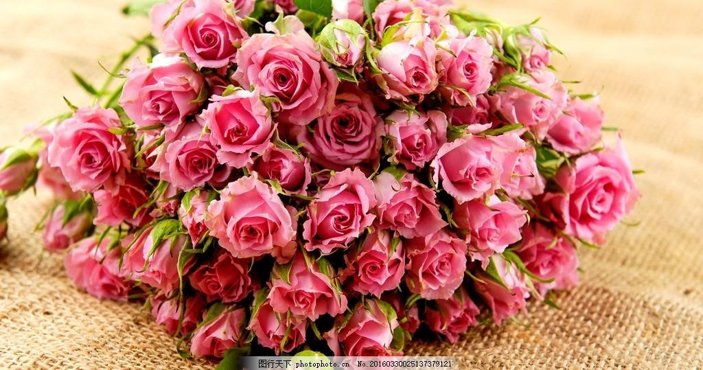 粉色蔷薇 摄影 花卉 素材 照片 花草 蔷薇 花朵 粉色 花束 摄影 生物
